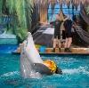 Дельфинарии, океанариумы в Внуково